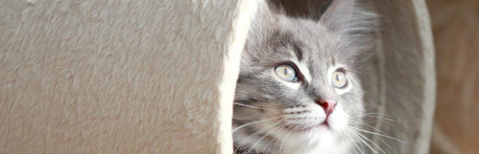 Happy cat in tunnel
